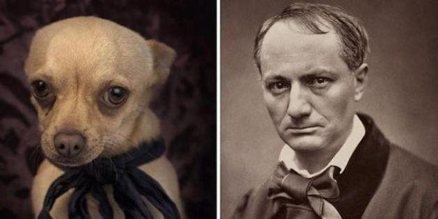 Il fait poser des chiens abandonnés à la manière d'écrivains