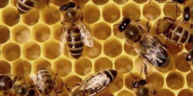 Une pétition pour sauver les abeilles des pesticides