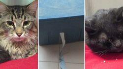 Deux chats abandonnés dans une boîte de plastique en