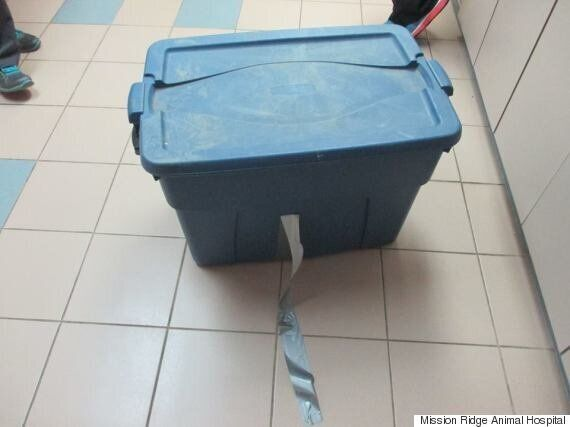Alberta : découverte de chats abandonnés dans une boîte fermée au ruban