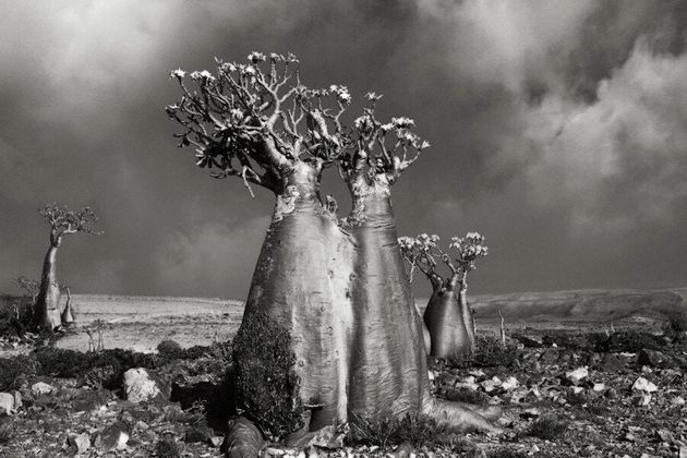 Les majestueux portraits d'arbres millénaires de Beth
