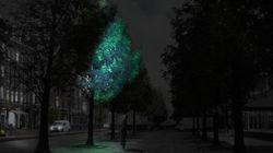 Dans un futur pas si lointain, les arbres fluorescents pourraient remplacer les lampadaires