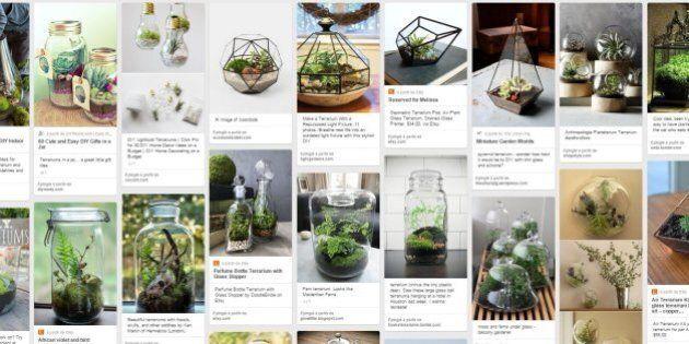 Le terrarium, ce jardin d'appartement qu'on peut oublier