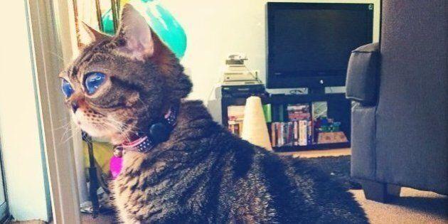 Matilda, le chat extraterrestre aux yeux énormes qui fait le buzz sur le