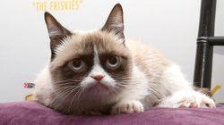 Grumpy Cat: sa maîtresse s'enrichit de 114 millions