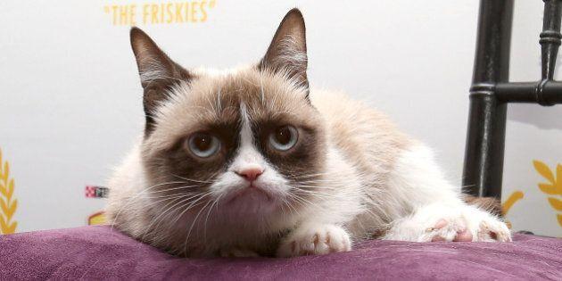 La fortune de Grumpy Cat évaluée à 114 millions