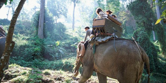 Four people Sitting on an Elephant, Chiang mai,