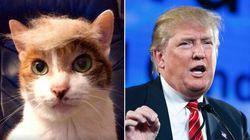 Les internautes se moquent de la coupe de cheveux de Donald Trump