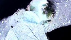 Un élève du Labrador capture la désagrégation d'un iceberg avec son