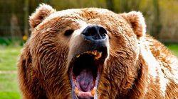 Le grizzly qui a tué une femme au Yukon était entré par la
