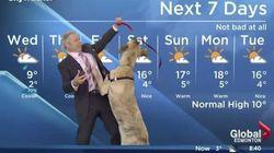 Un chien perturbe le bulletin météo