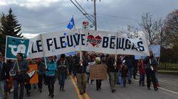 Port pétrolier à Cacouna: la pétition compte déjà 35 000