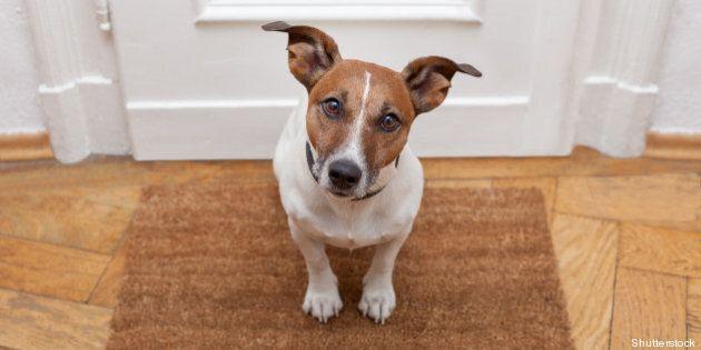 dog welcome home on brown