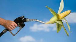 Biocarburant: manger ou conduire, il faut