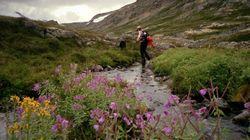 31 photos qui vous donneront envie de partir vers le Yukon dès