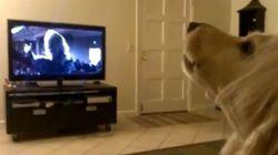 Ce chien se prend pour une diva