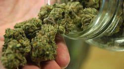 Marijuana thérapeutique : inquiétudes quant au nouveau règlement
