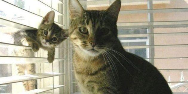 Un «royaume de chats» découvert au milieu d'immondices près