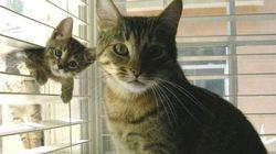 Des dizaines de chats découverts dans des conditions