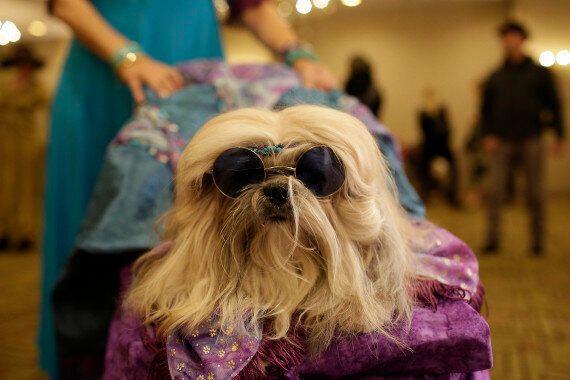 Fashion Week : 11ème édition du New York Pet Show