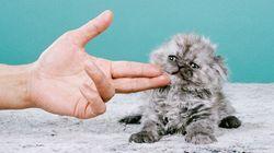 De l'art et des chats: que demander de plus?