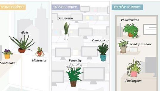 Voici comment choisir LA plante pour votre