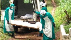 Ebola, portrait d'un virus