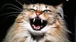 Votre chat n'aime pas se faire flatter, c'est
