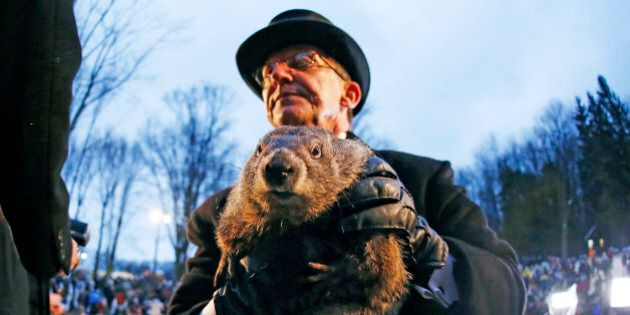 Groundhog Club handler Ron Ploucha holds Punxsutawney Phil, the weather prognosticating groundhog, during...