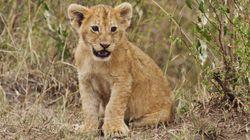 Il y aurait 50% moins d'animaux sauvages sur Terre qu'il y a 40
