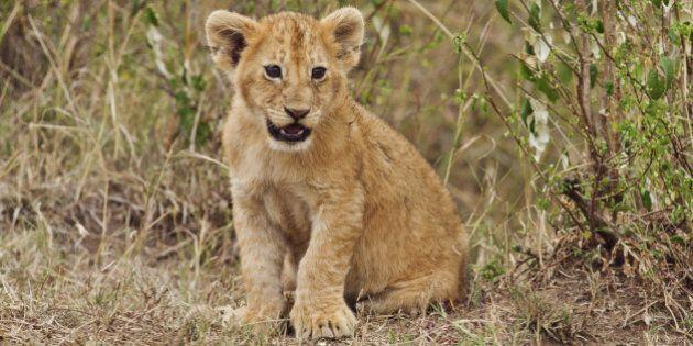 Il y aurait 50% moins d'animaux sauvages sur Terre qu'il y a 40 ans, selon un rapport de