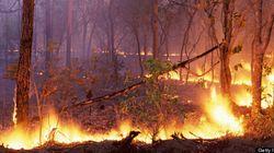 Feux de forêt : le risque est extrême dans certaines régions du