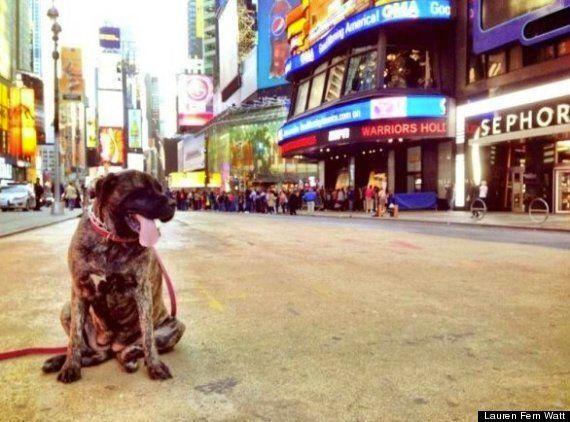 Cette chienne atteinte d'un cancer aura vécu des derniers moments d'exception