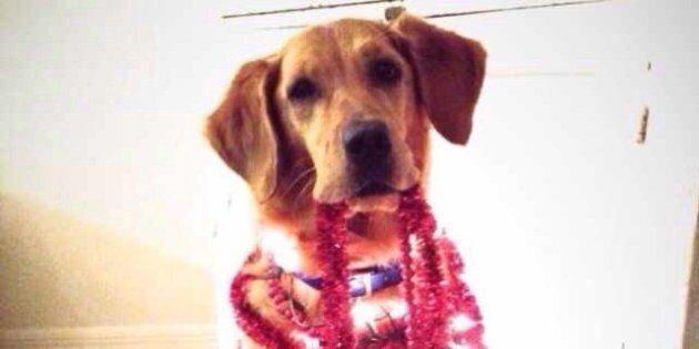 Un chien malade pose pour des photos pendant sa convalescence