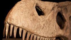Les dinosaures: des animaux à sang
