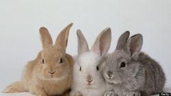 Nul besoin de procréer «comme des lapins», selon le