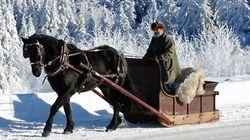Un cheval livrera le pain à domicile à