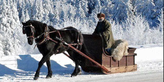Un cheval livrera le pain à domicile aux résidents de