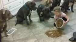 La vidéo d'une petite fille qui nourrit six pitbulls crée la