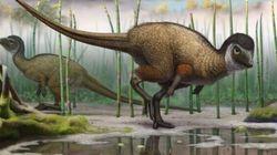 Tous les dinosaures avaient peut-être des
