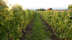 Kava Tours: La route des vins du Québec en formule clé en main