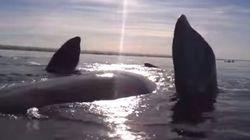 Deux kayakistes soulevés par une baleine