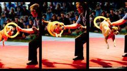 « Small tent... big shoulders » à Mtl Complètement Cirque : le party familial par excellence! (CRITIQUE/PHOTOS/
