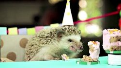 Un petit gâteau de fête pour un petit hérisson