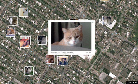 «I Know Where Your Cat Lives»: une carte pour localiser les chats sur la
