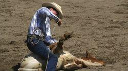 Festival western : la SPCA dénonce la cruauté envers les