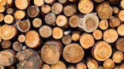 L'industrie forestière à la croisée des