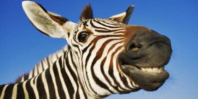 Ouverture du parc animalier Zoofari où les marcheurs cotoient les