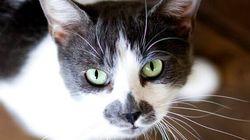 50 chats congelés retrouvés en