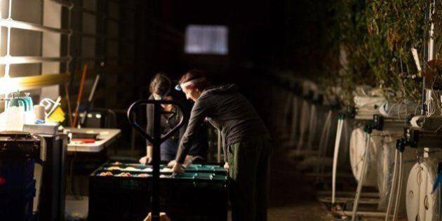 Entrevue avec une cueilleuse de nuit de l'équipe des Fermes